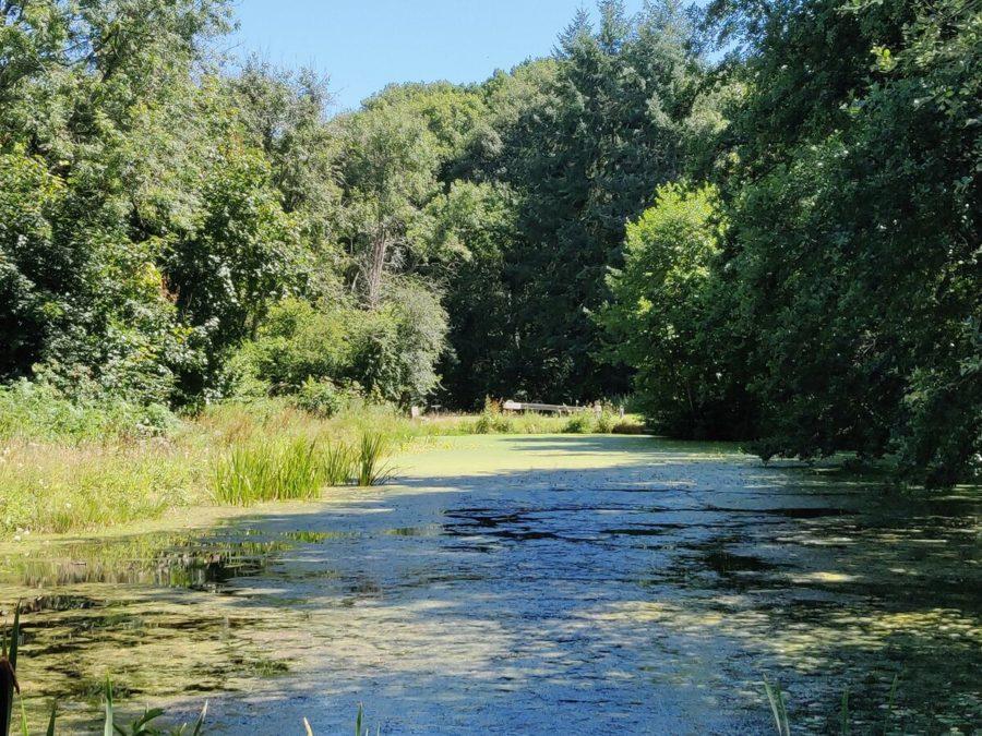 Side Pond between locks 67 & 68